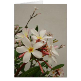 Plumeria havaiano cartão comemorativo