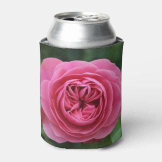 Podem uns rosas mais frescos macro porta-lata