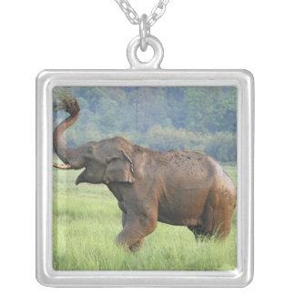 Poeira que banha-se, nacional do elefante indiano colar com pendente quadrado