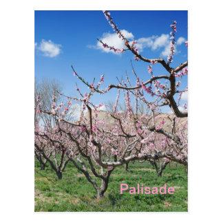 Pomar do pêssego do primavera no cartão do viagem