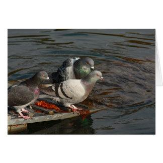 pombas pela água cartão de nota