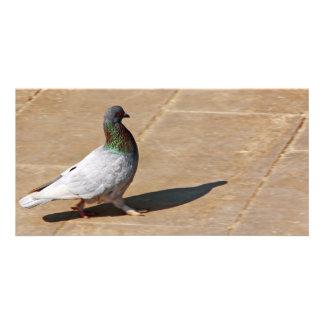 Pombo Cartão Com Foto