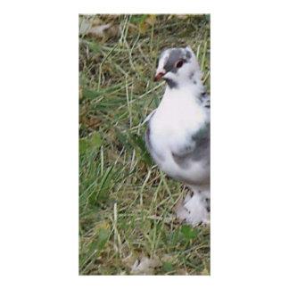 Pombo pagado bonito branco e das cinzas pena cartão com foto