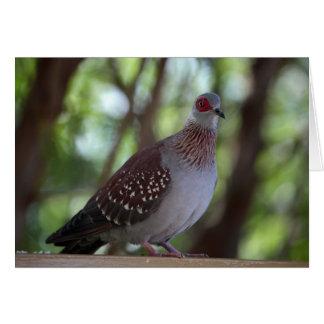 Pombo salpicado (Guiné do Columba) Cartão Comemorativo