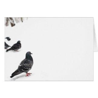 Pombos Cartão
