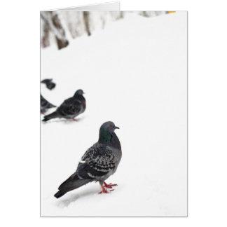 Pombos Cartão Comemorativo
