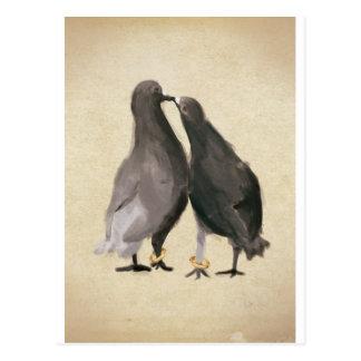 Pombos românticos cartão postal