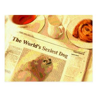 """Pomeranian, o cão o mais """"sexy"""" do mundo"""