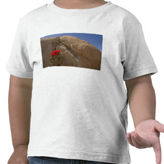 Ponche Claret ou de monte do Mojave cacto na flor Camisetas