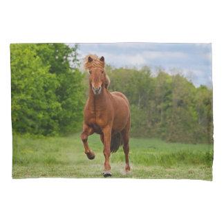 Pônei islandês em amantes engraçados de um cavalo