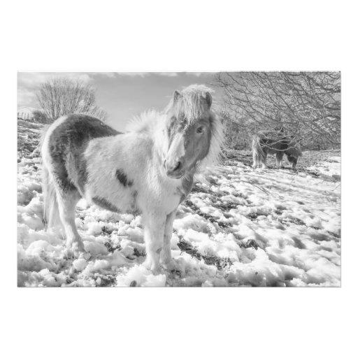 Pôneis da neve - impressões da foto