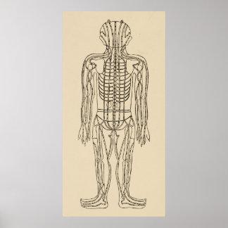 Pontos meridianos dos caminhos da acupunctura do pôster
