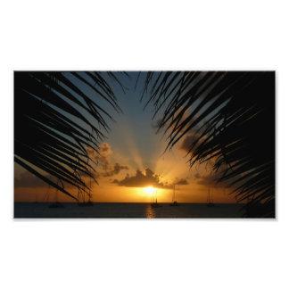 Por do sol através do impressão da foto das fronda