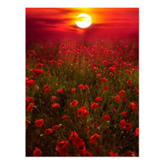 Por do sol bonito sobre o campo de flores cartão postal