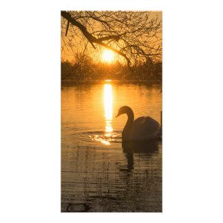 Por do sol com cisne cartão