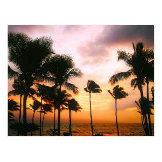 Por do sol havaiano das palmeiras da praia - cartão postal