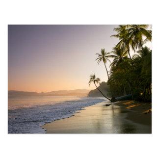 Por do sol na praia franjada palma, Costa Rica Cartão Postal