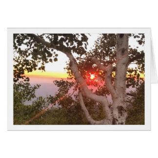 Por do sol no cartão do Mt. Lemmon