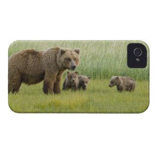 Porca do Alasca do urso de Brown e três Cubs, Capas Para iPhone 4 Case-Mate