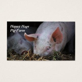 Porco com as orelhas assimétricos que snuffling na cartão de visitas