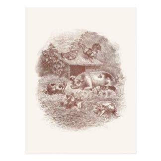 Porcos e galinhas no Barnyard Cartão Postal