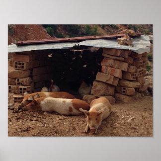 Porcos no poster da casa de Brich