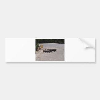 Porcos pretos selvagens adesivo para carro