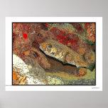 Porcupinefish no coral vermelho pôsteres
