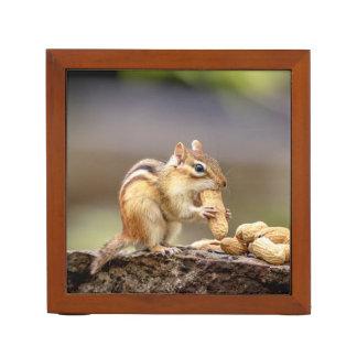Porta Caneta Chipmunk que come um amendoim
