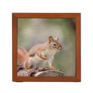 Porta Caneta Esquilo vermelho