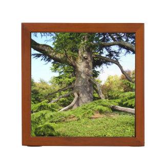 Porta Caneta Organizador da mesa da árvore de Cedro--Líbano