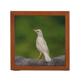 Porta Caneta Pisco de peito vermelho do albino no ponto da