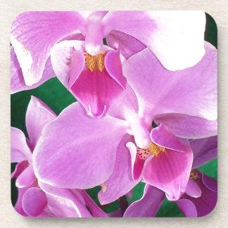 Porta-copo A orquídea floresce close up no rosa