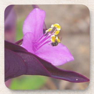 Porta-copo a planta roxa chamou o spiderwort e uma abelha