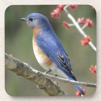 Porta-copo Bluebird
