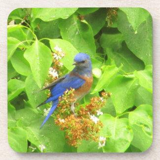 Porta-copo Bluebird na conversão do Lilac