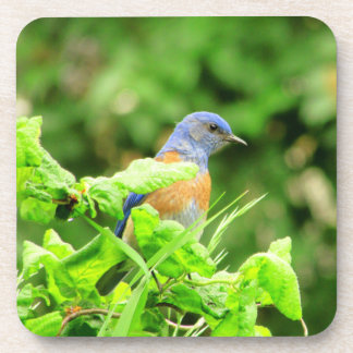 Porta-copo Bluebird no Corkscrew Bush