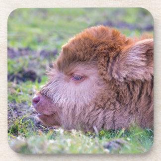 Porta-copo Cabeça da vitela escocesa recém-nascida marrom do