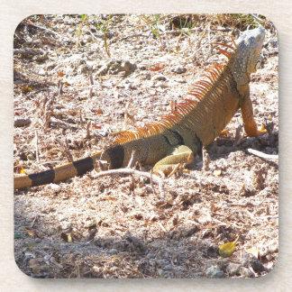 Porta-copo Caças alaranjadas da iguana