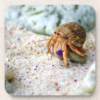 Porta-copo Caranguejo da areia, Curaçau, ilhas das Caraíbas,