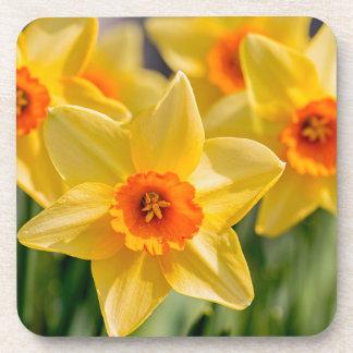 Porta-copo Daffodils do primavera