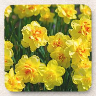 Porta-copo Daffodils dobro