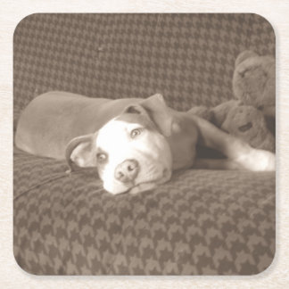 Porta-copo De Papel Quadrado American_Pit_Bull_Terrier_and_teddy_bear_on_couch.