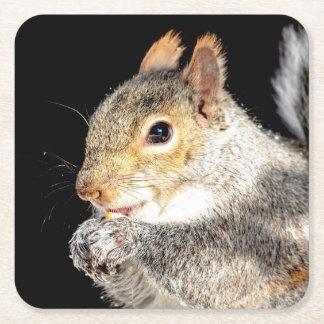 Porta-copo De Papel Quadrado Esquilo que come uma porca