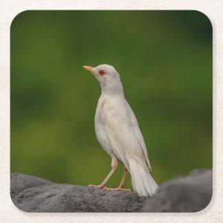 Porta-copo De Papel Quadrado Pisco de peito vermelho do albino no ponto da