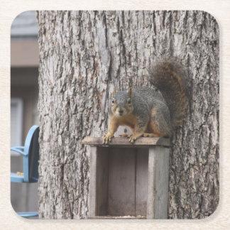Porta-copo De Papel Quadrado Porta copos da bebida do esquilo