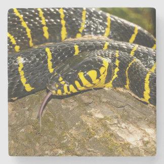 Porta-copo De Pedra Dendrophila de Boiga ou cobra dos manguezais