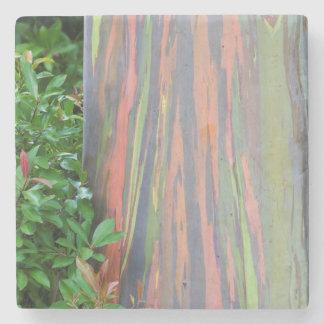Porta-copo De Pedra Eucalipto do arco-íris