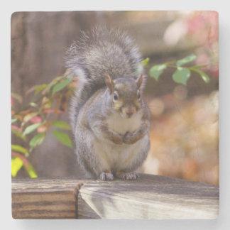 Porta-copo De Pedra Implorando o esquilo