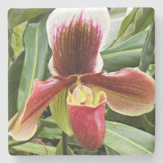 Porta-copo De Pedra Orquídea do Paphiopedilum floral